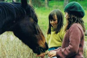 girls feeding horse