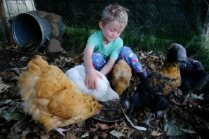 boy with hens